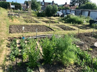 well kept allotments